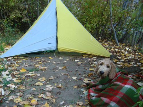 Jordan's small tent and big dog