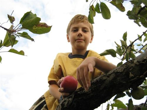 Hunter in the apple tree